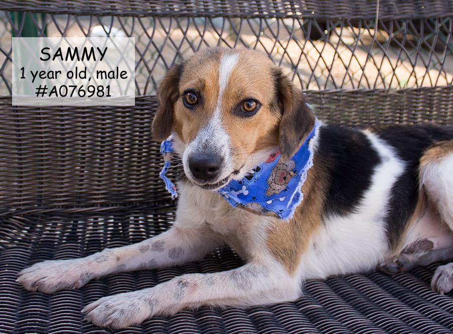 Featured Pet: SAMMY
