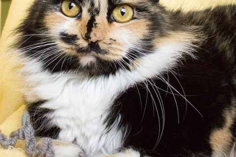 Featured Pet: Twister