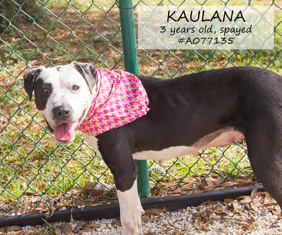 Featured Pet: KAULANA