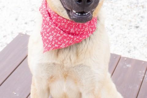 Featured Pet: SADIE