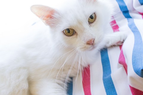 Featured Pet: SNOW WHITE