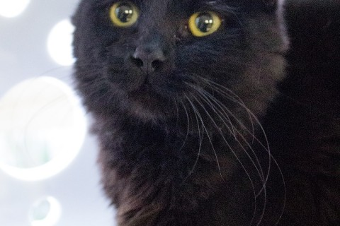 Featured Pet: MERLIN