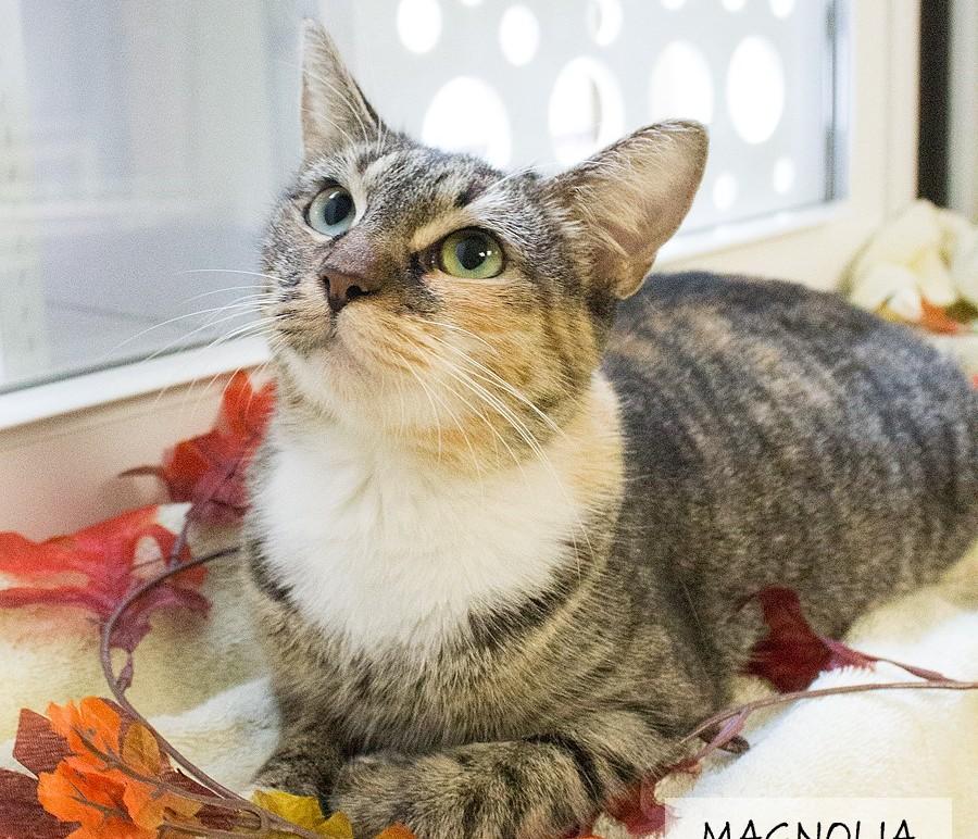 Featured Pet: MAGNOLIA