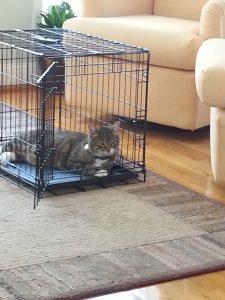 grey cat 549-20150307_133955
