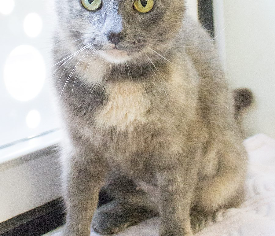 Featured Pet: LUCY LU
