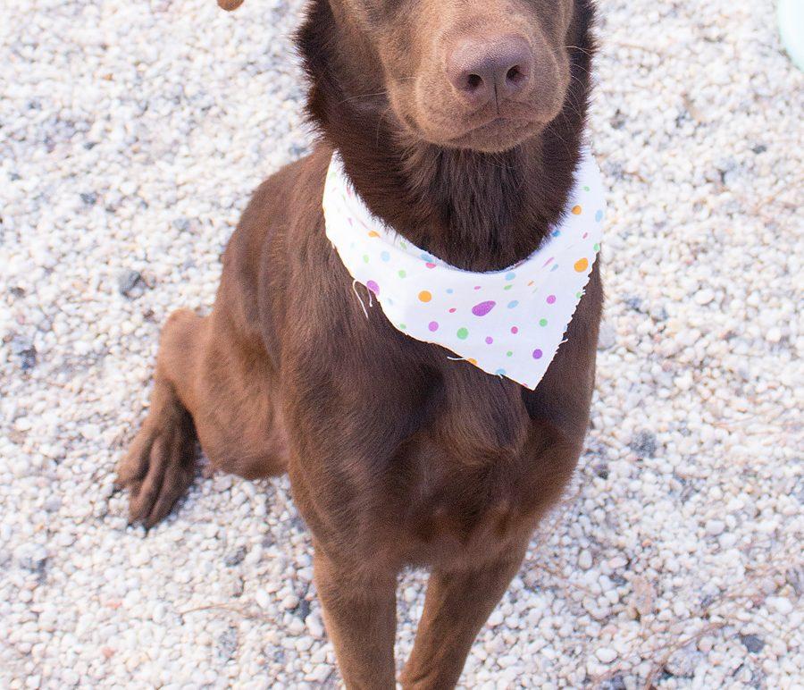 Featured Pet: JAVAH