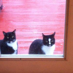 sophie cat 571-image