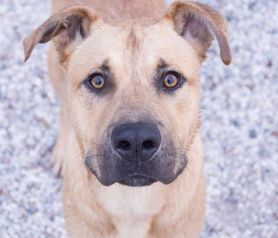 Featured Pet: MACK