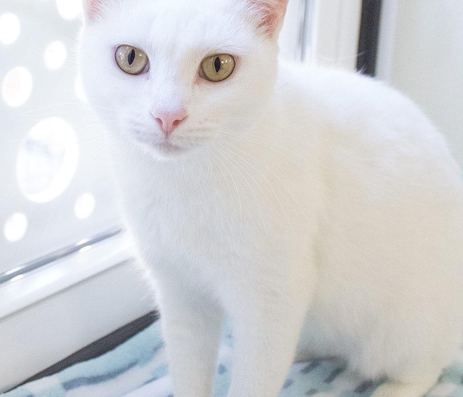 Featured Pet: MARSHA
