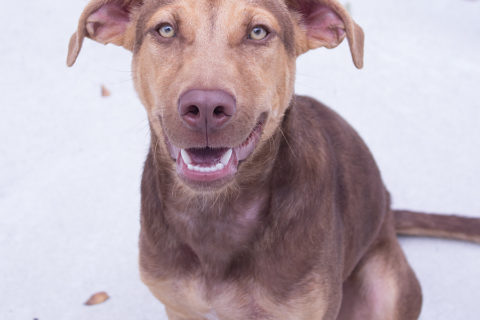 Featured Pet: TURBO